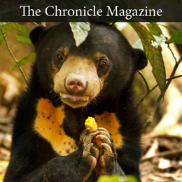 Sun Bear in Lewis Clark News