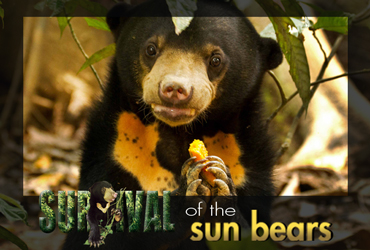 SURVIVAL OF THE SUN BEARS